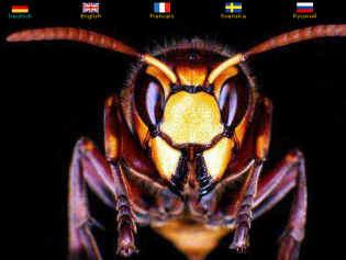 partner-hornissenschutz