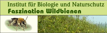 partner-faszination-wildbienen