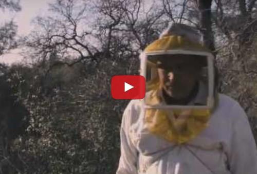 More than honey - Trailer